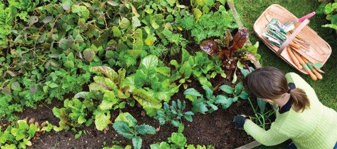 organic-gardening
